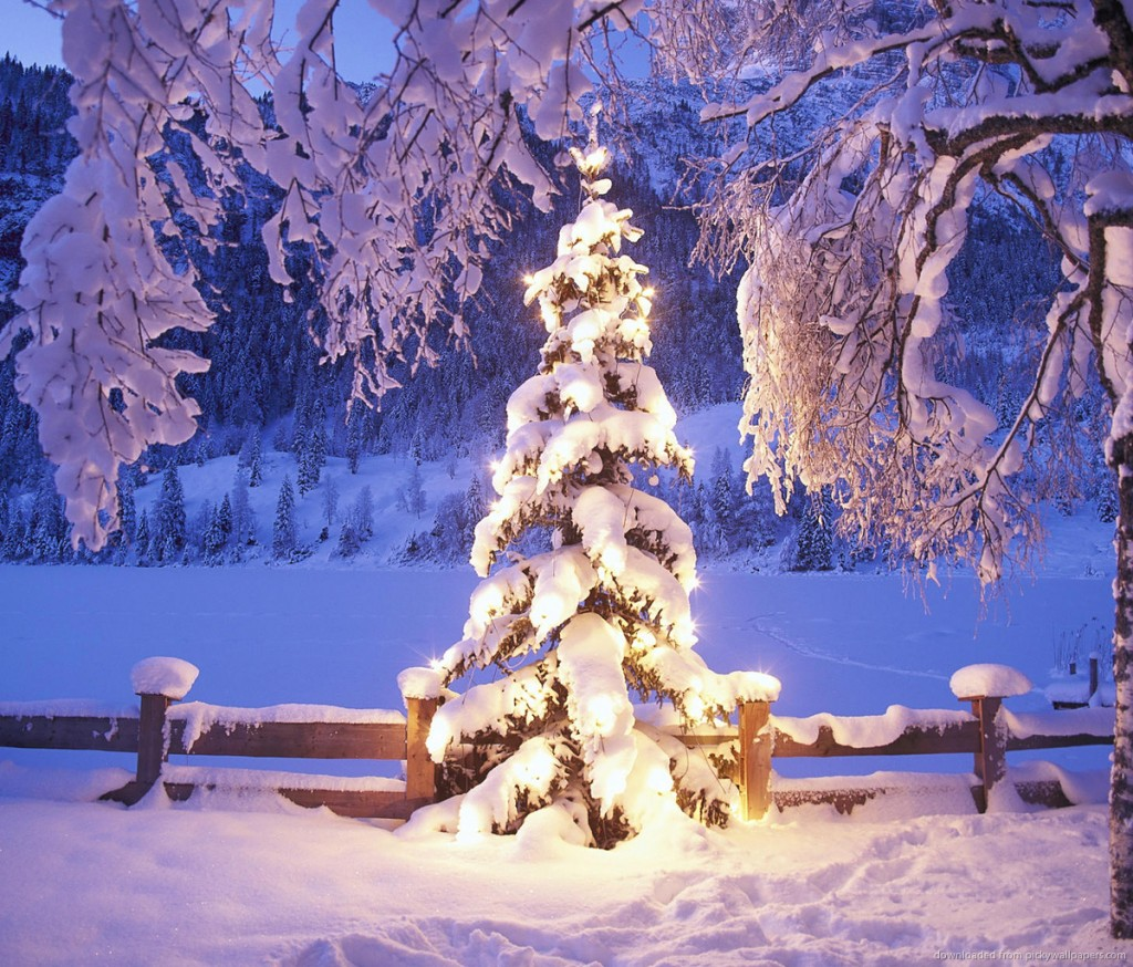 natural-christmas-tree-in-snow